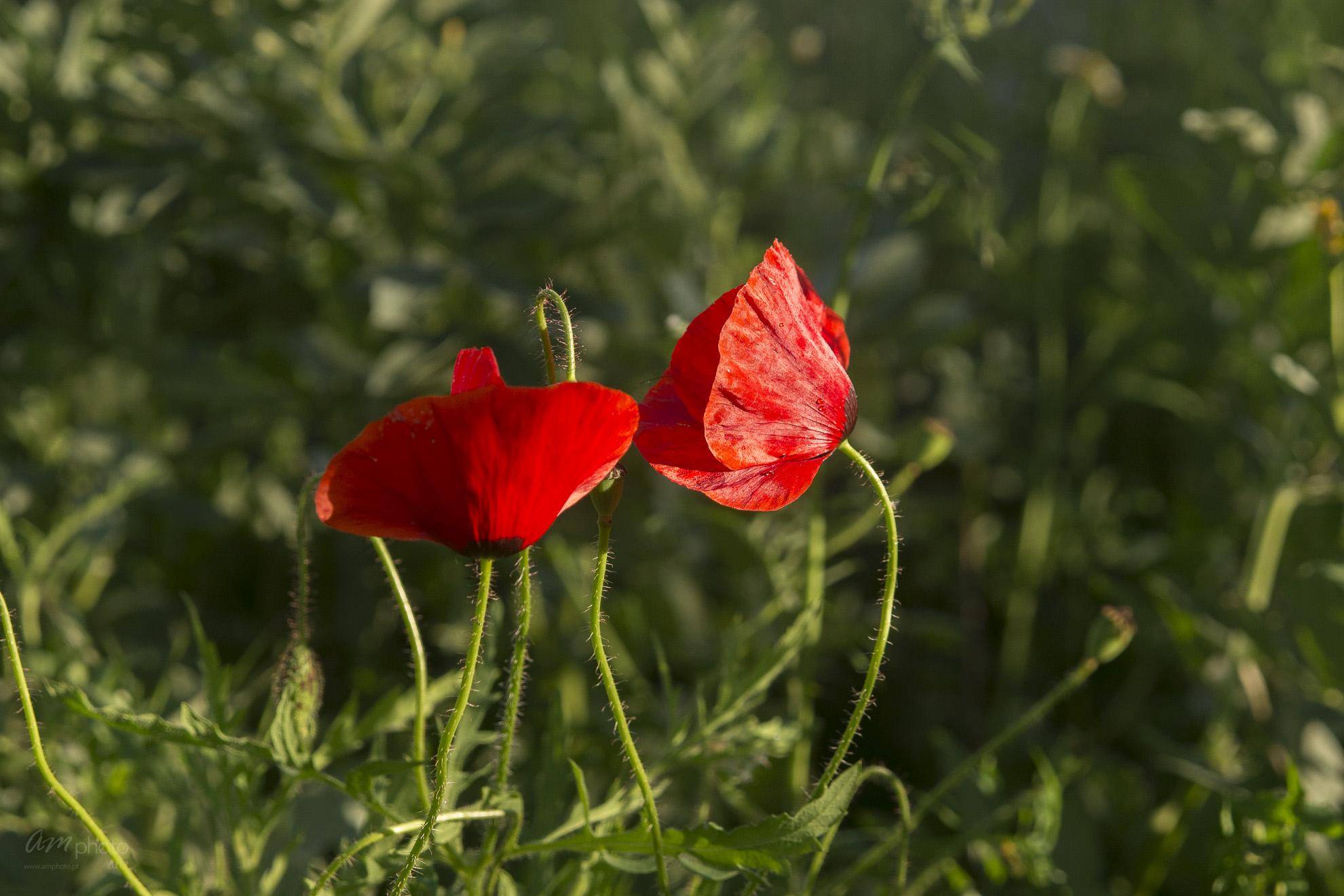 Wild Flowers-324