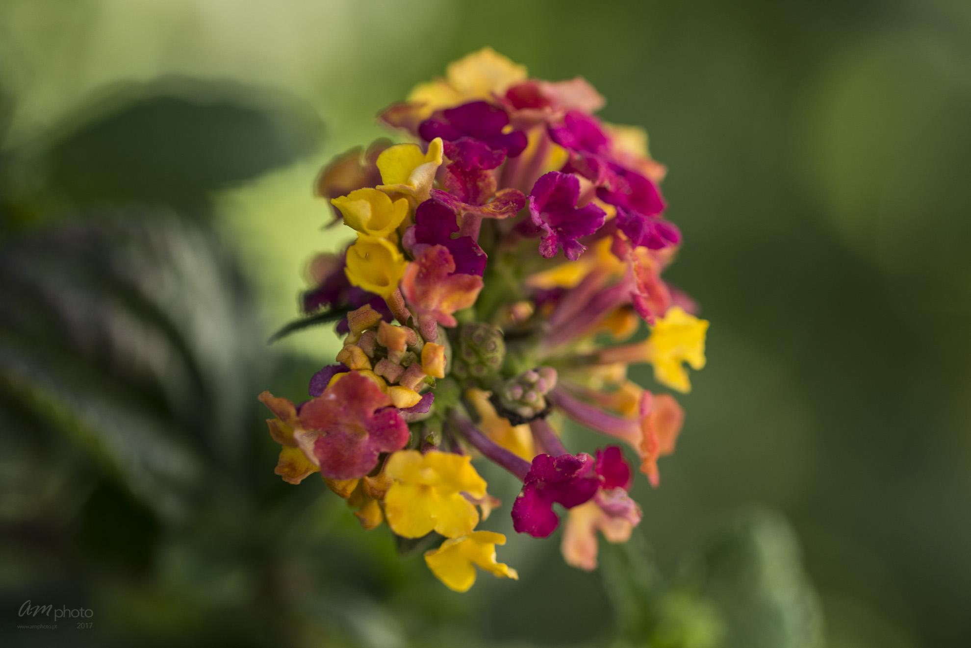 Wild Flowers-737