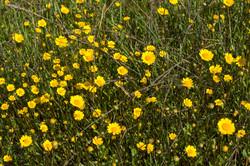 Wild Flowers-197