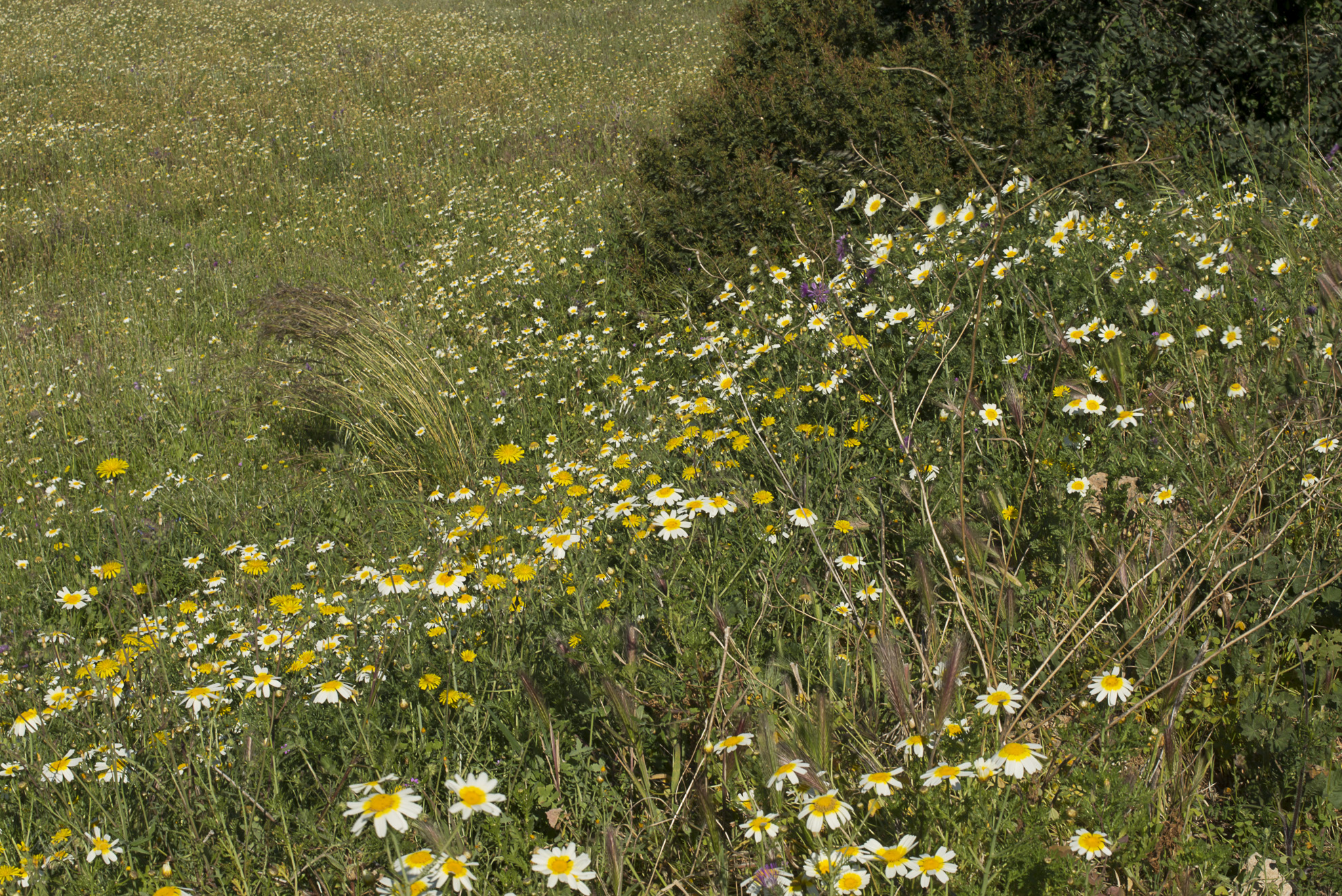 Wild Flowers-273