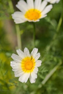 Wild Flowers-504
