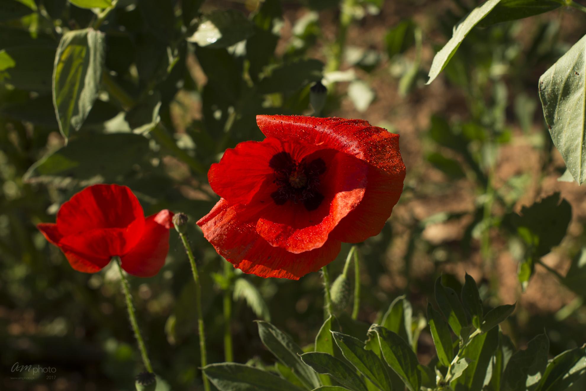 Wild Flowers-301