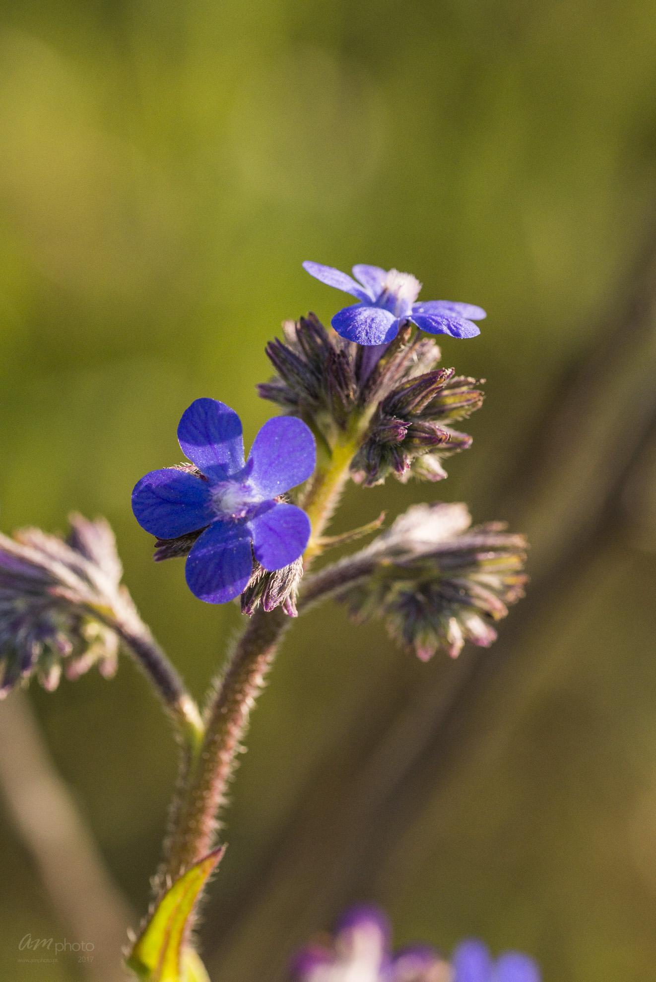 Wild Flowers-619