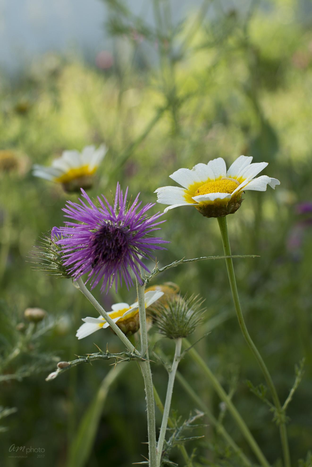 Wild Flowers-242