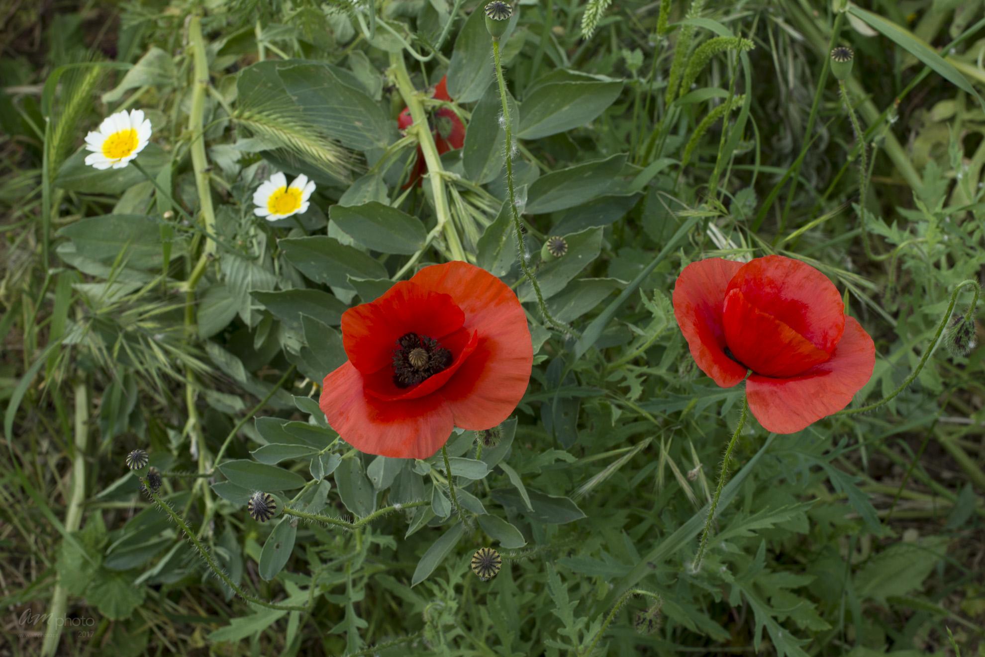 Wild Flowers-222