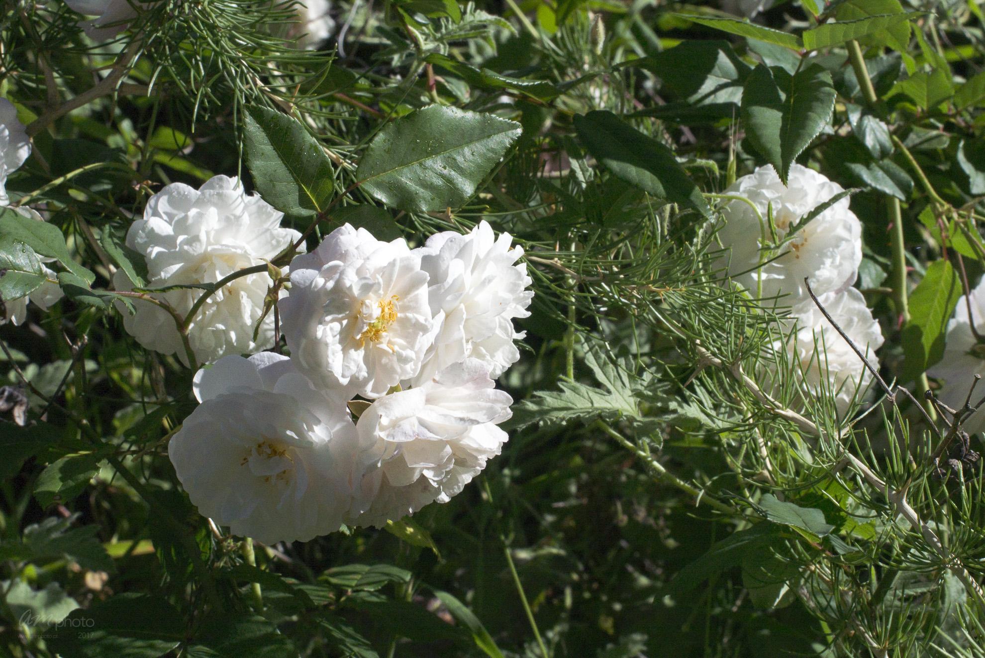Wild Flowers-28