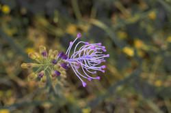 Wild Flowers-247