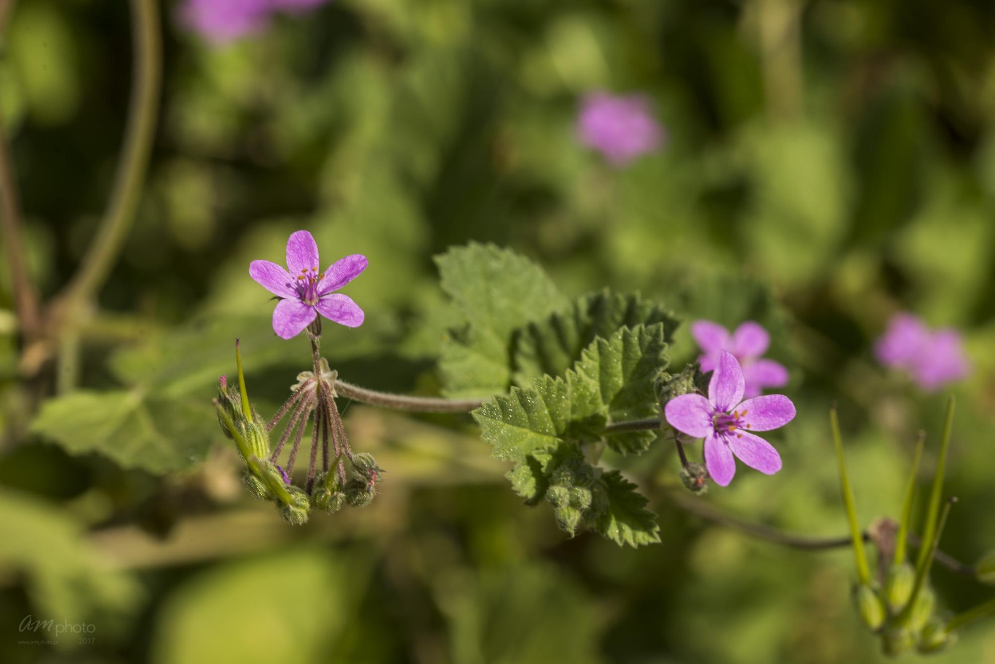 Wild Flowers-663