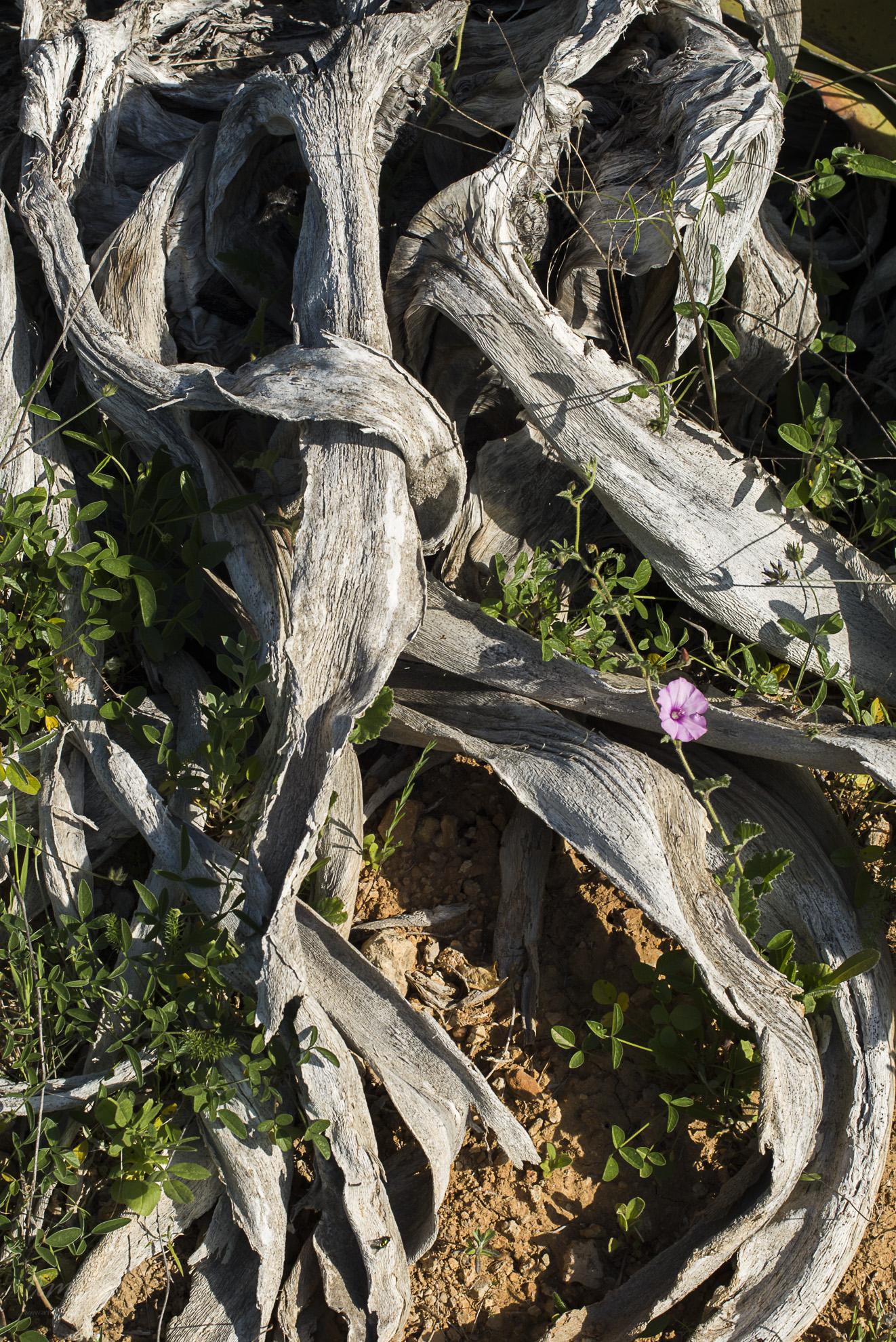 Wild Flowers-195