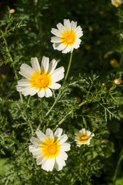 Wild Flowers-511