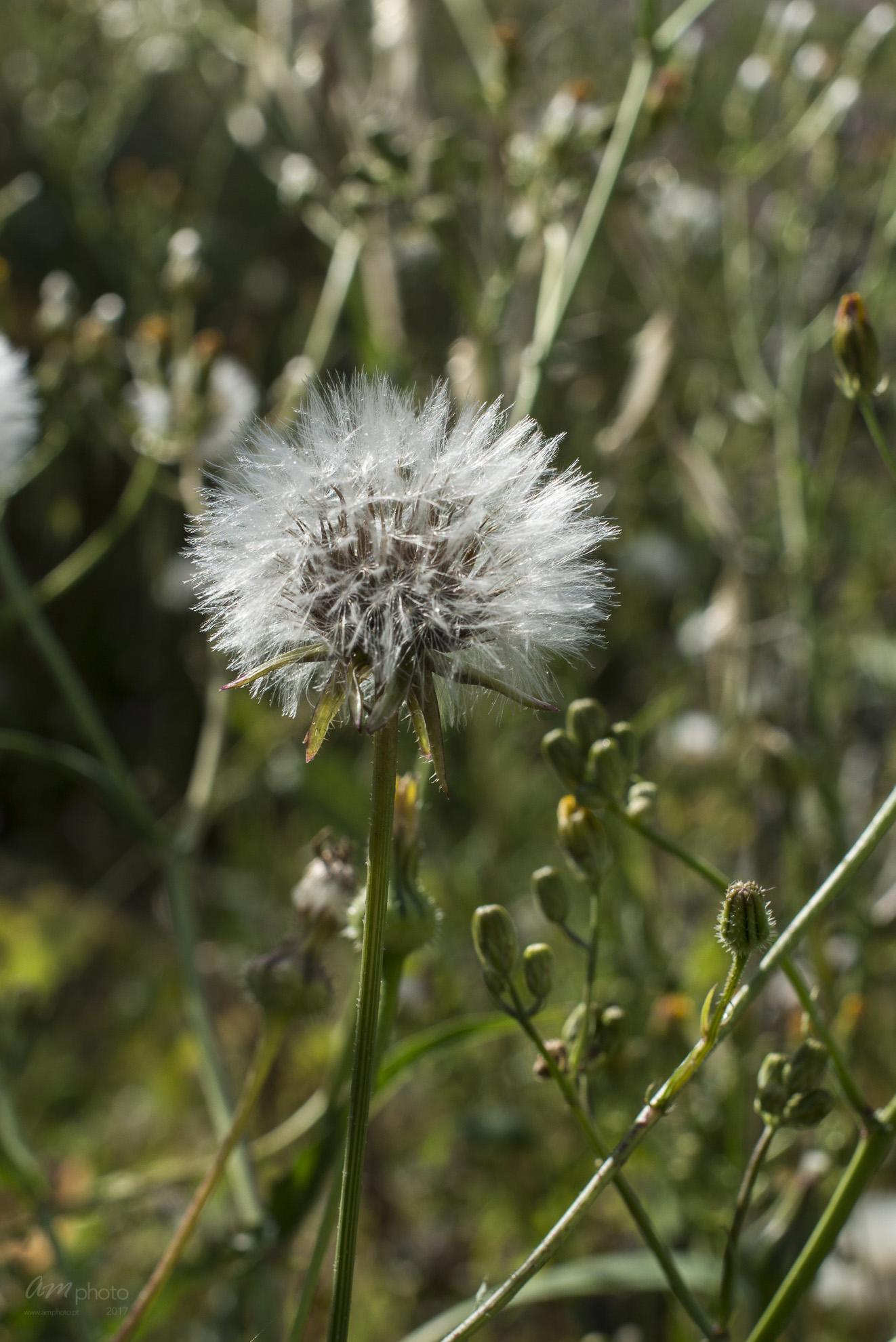 Wild Flowers-95