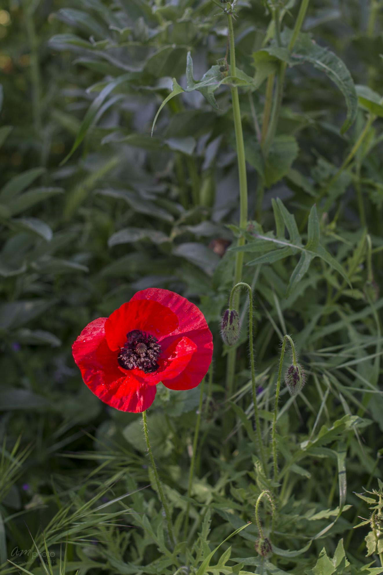 Wild Flowers-403