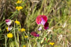 Wild Flowers-170