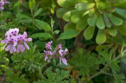 Wild Flowers-377