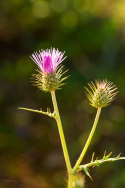Wild Flowers-651