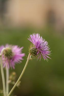 Wild Flowers-523