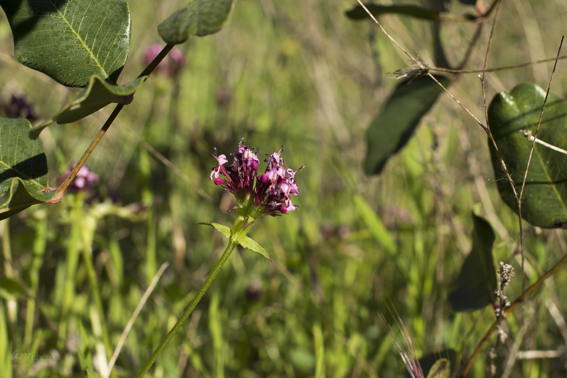 Wild Flowers-256