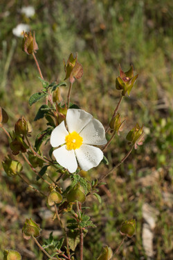 Wild Flowers-202