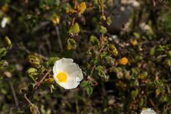 Wild Flowers-193