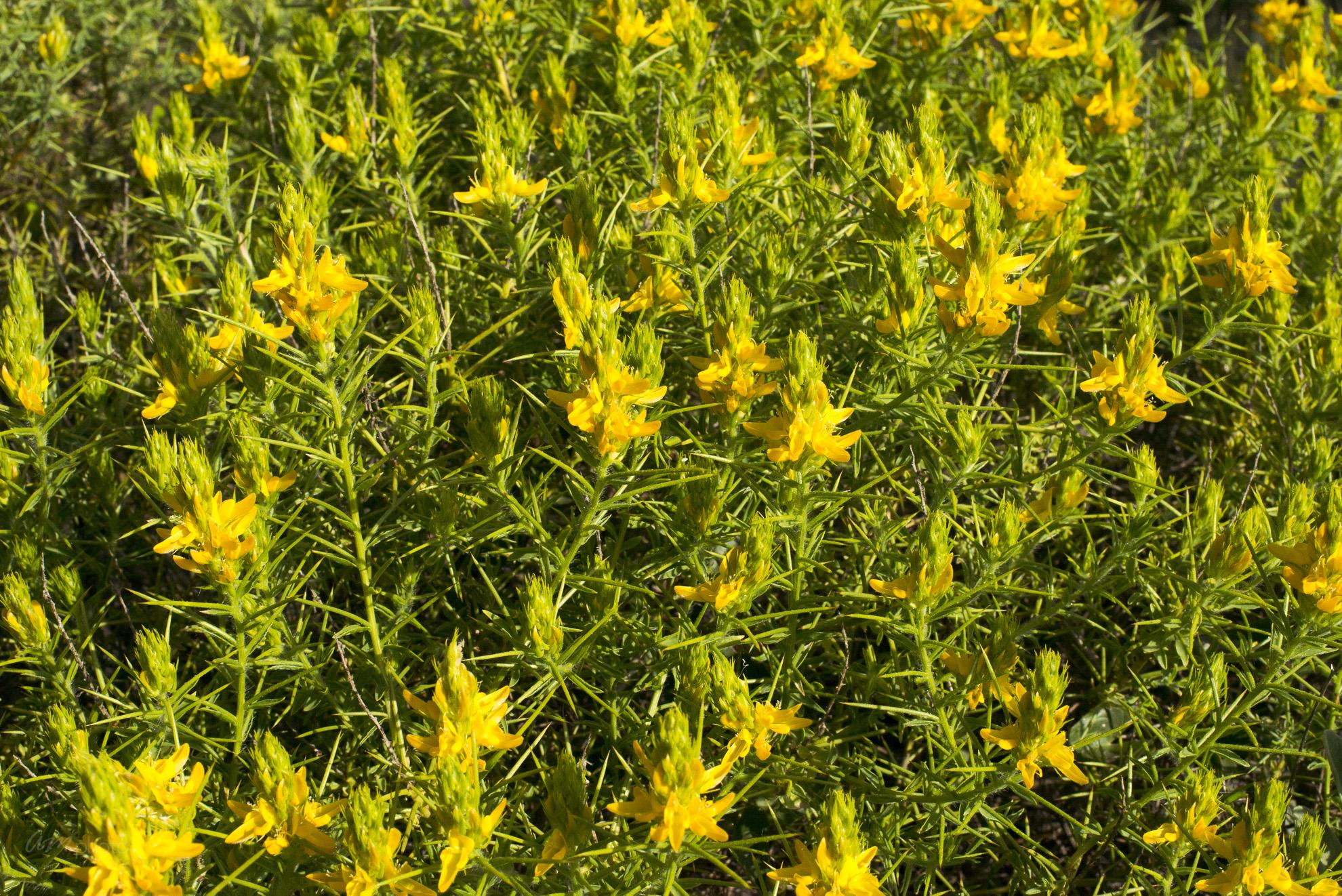 Wild Flowers-155