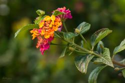 Wild Flowers-494