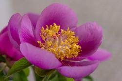 Wild Flowers-542