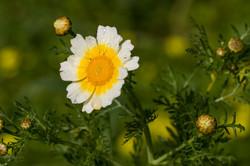 Wild Flowers-506