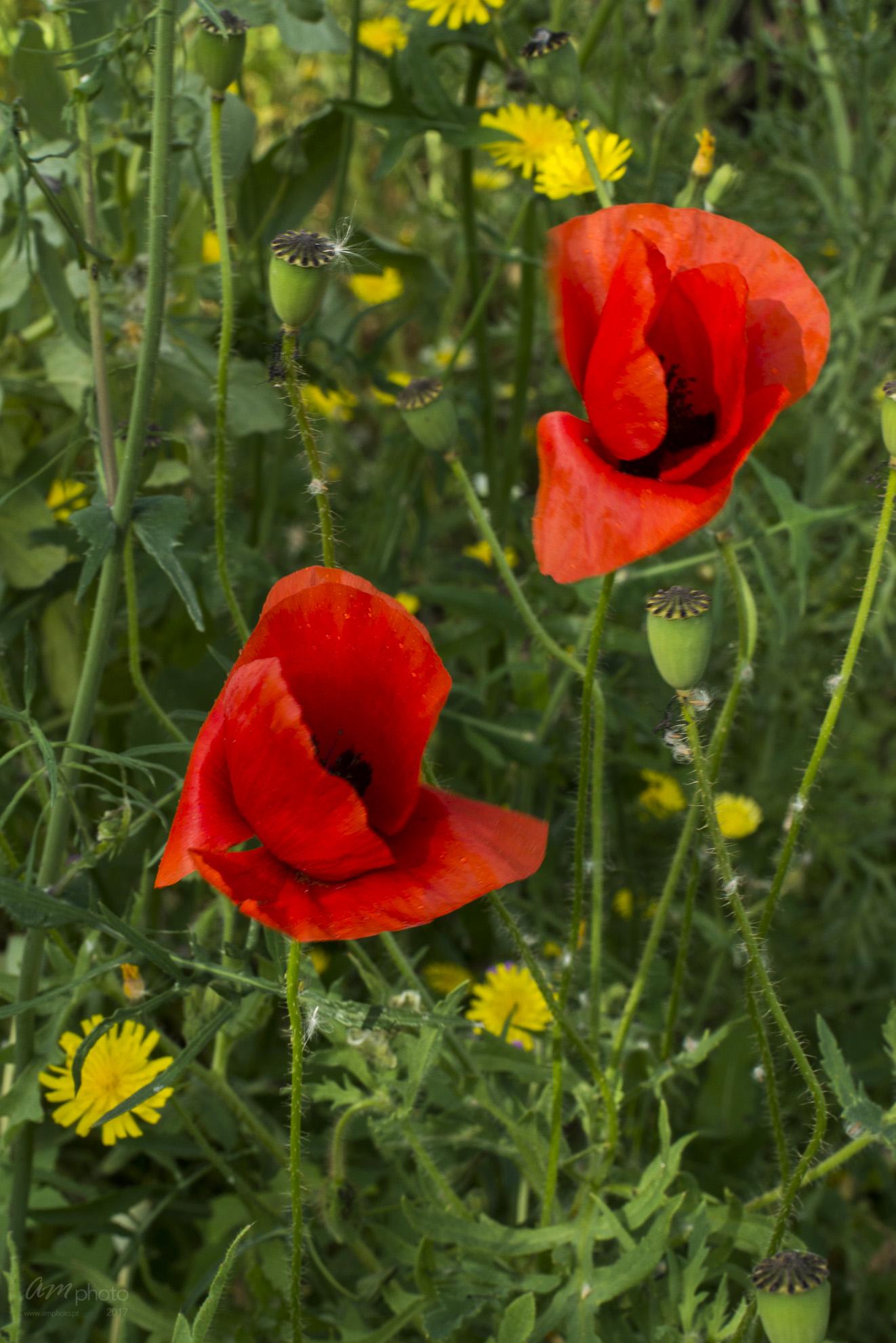 Wild Flowers-227