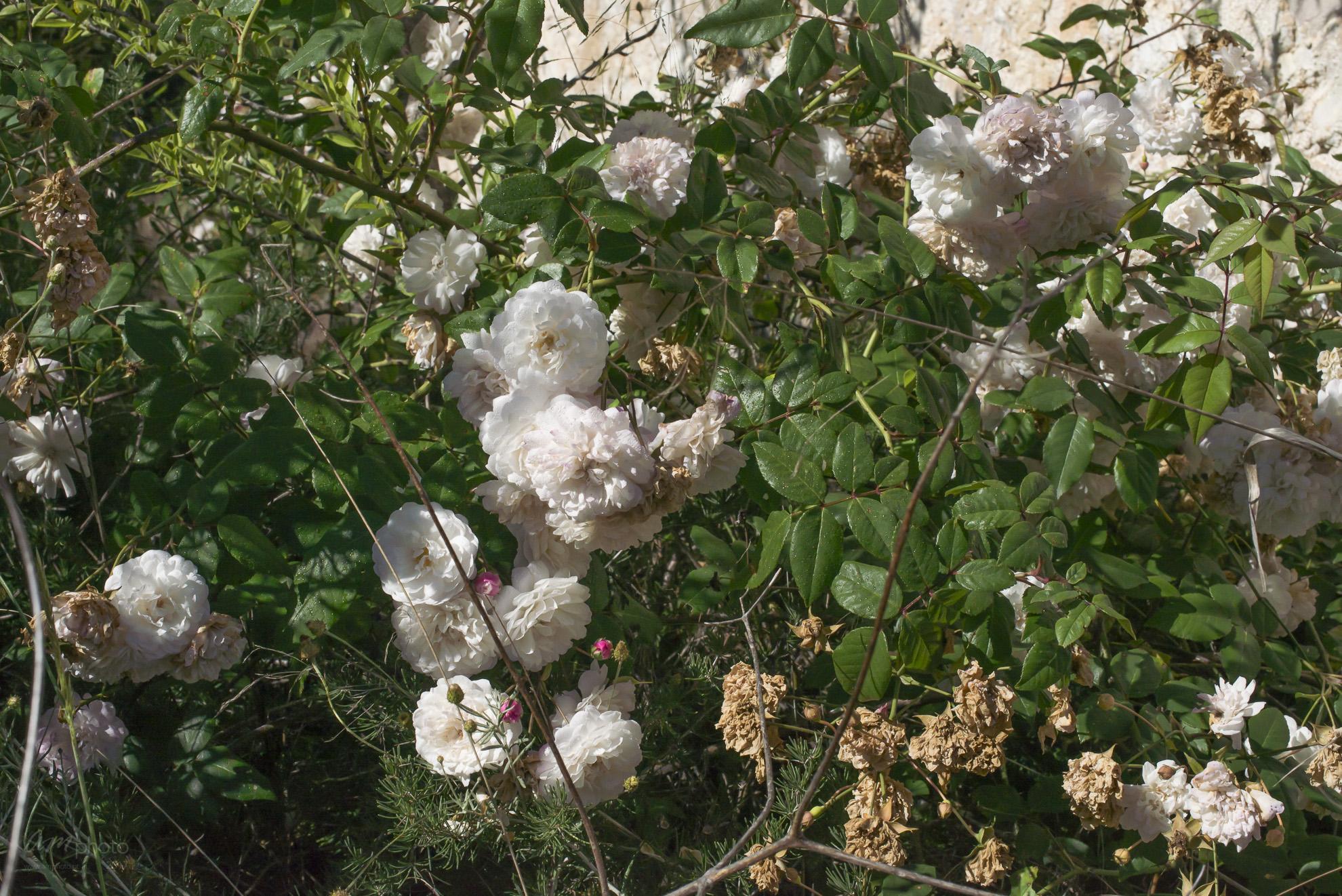 Wild Flowers-41