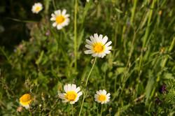 Wild Flowers-316