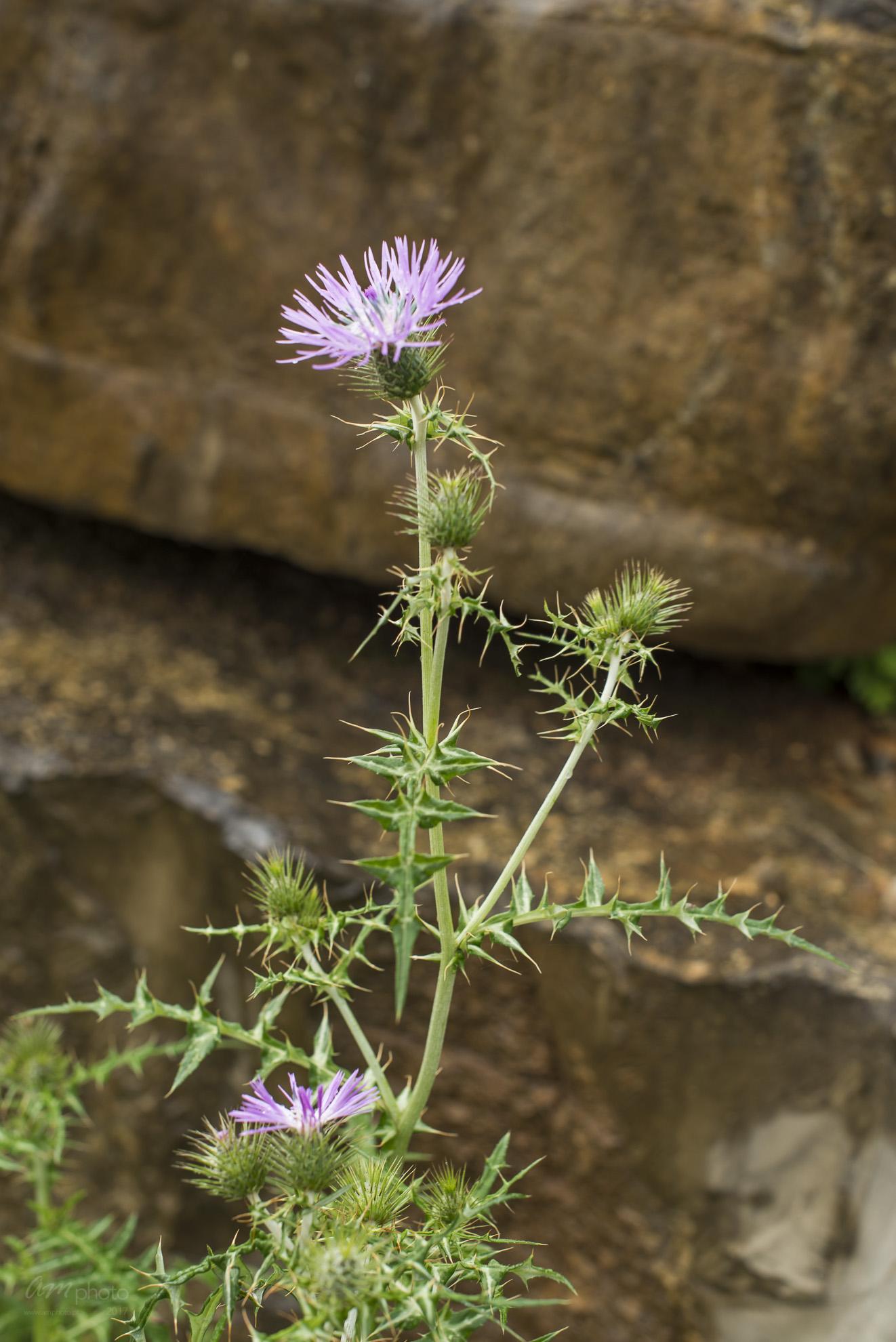 Wild Flowers-475