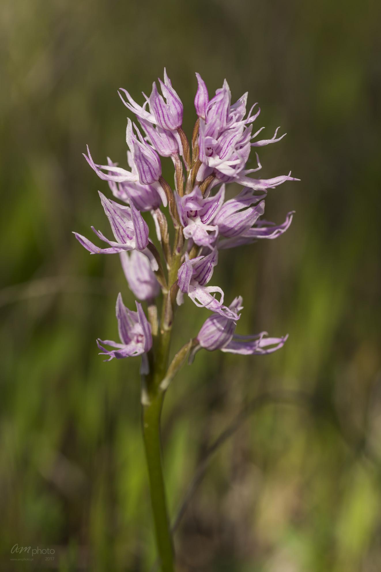 Wild Flowers-699