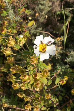 Wild Flowers-134