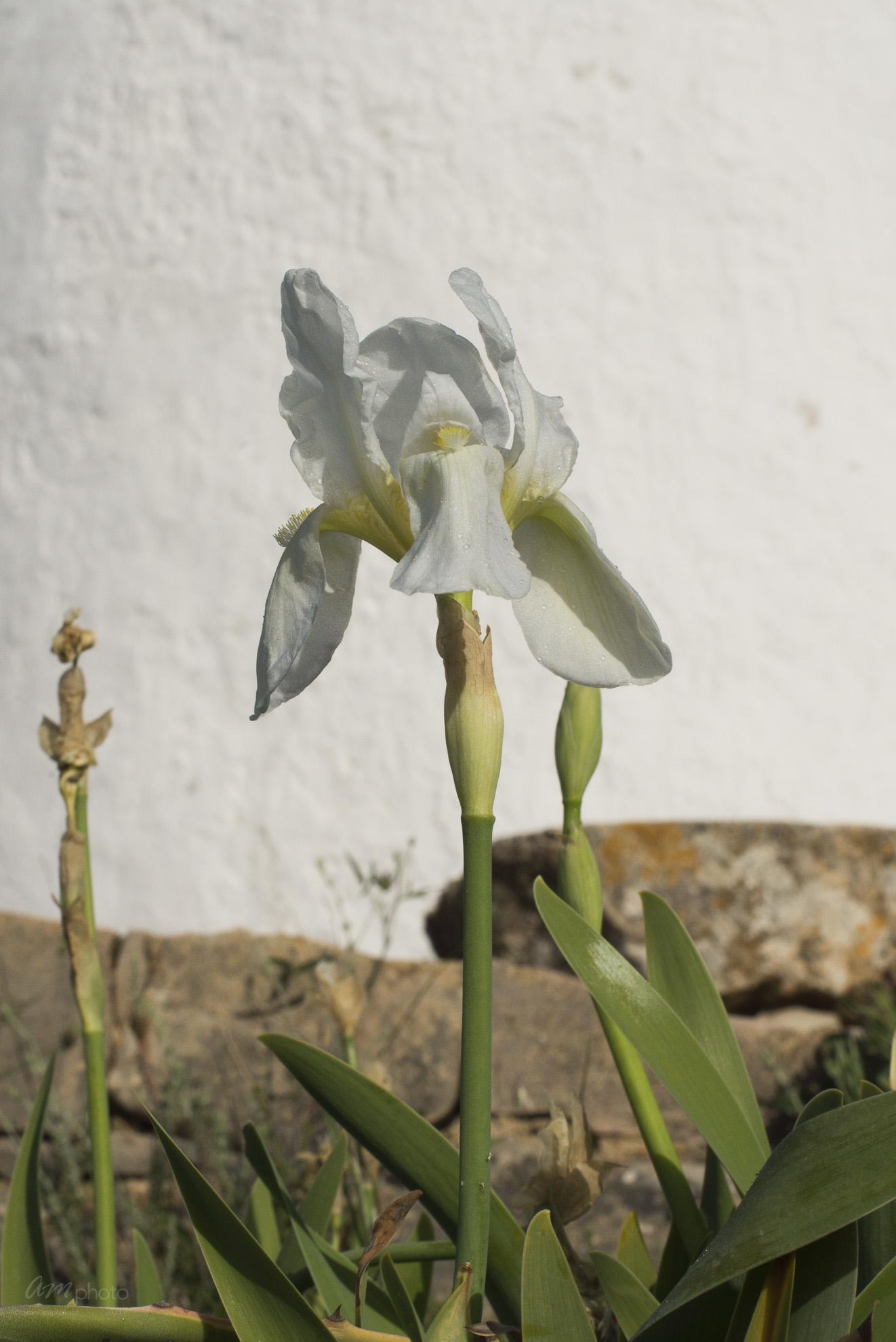 Wild Flowers-160