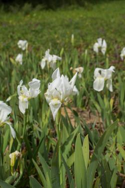Wild Flowers-486