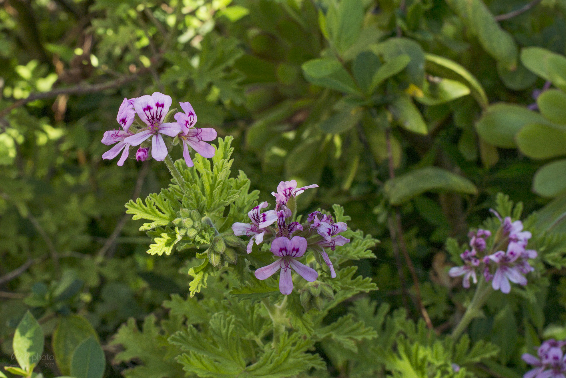 Wild Flowers-376