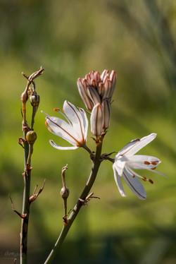 Wild Flowers-589