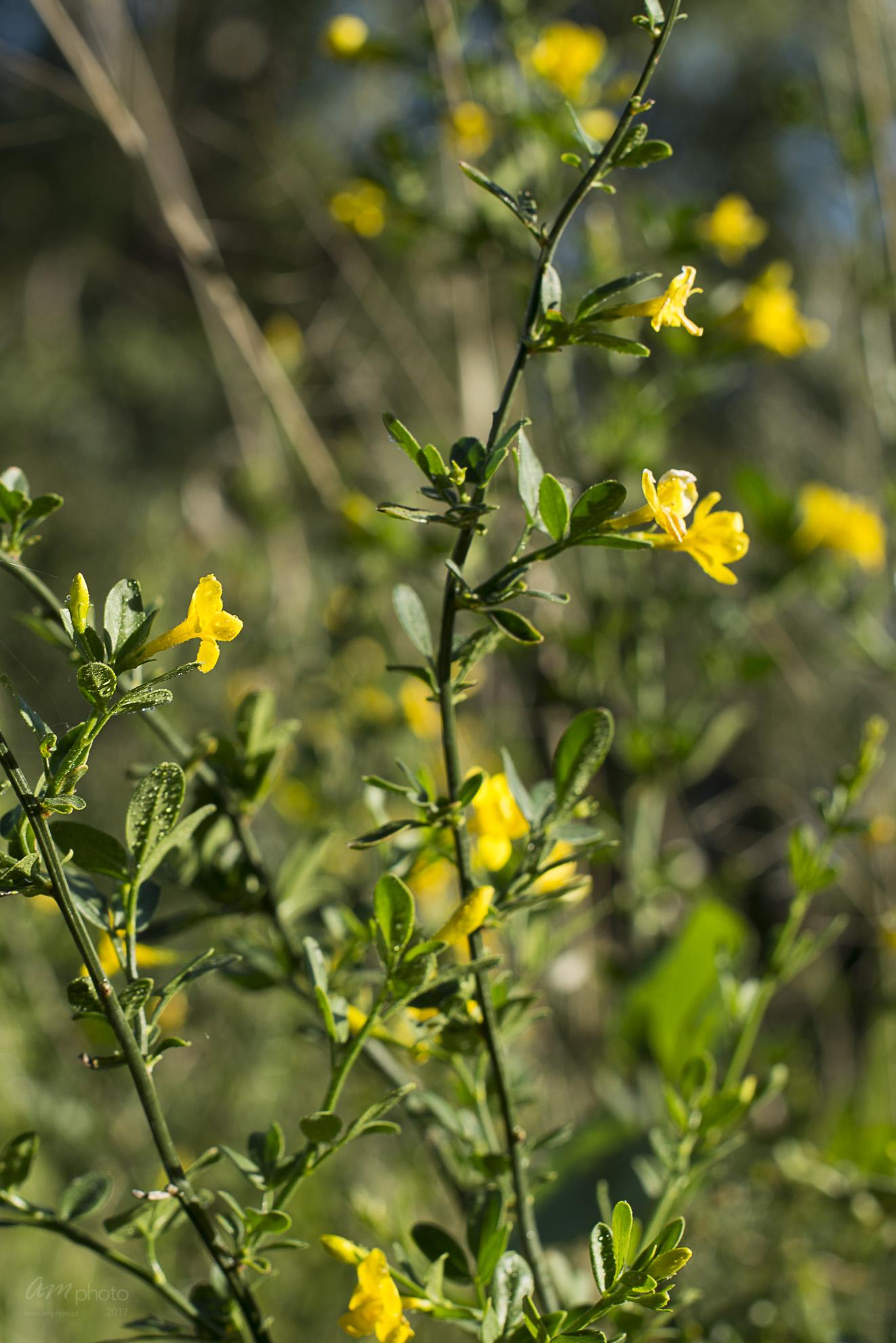 Wild Flowers-254