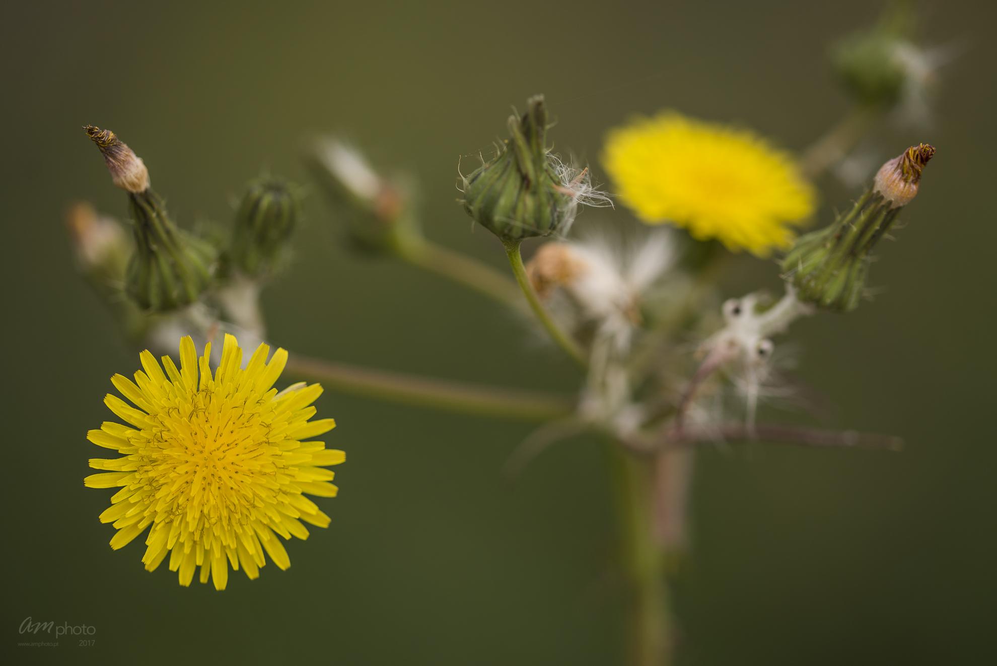 Wild Flowers-525