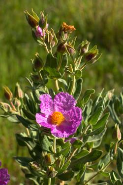 Wild Flowers-185