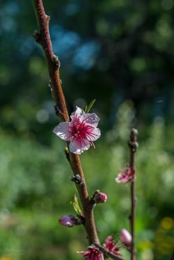 Wild Flowers-404