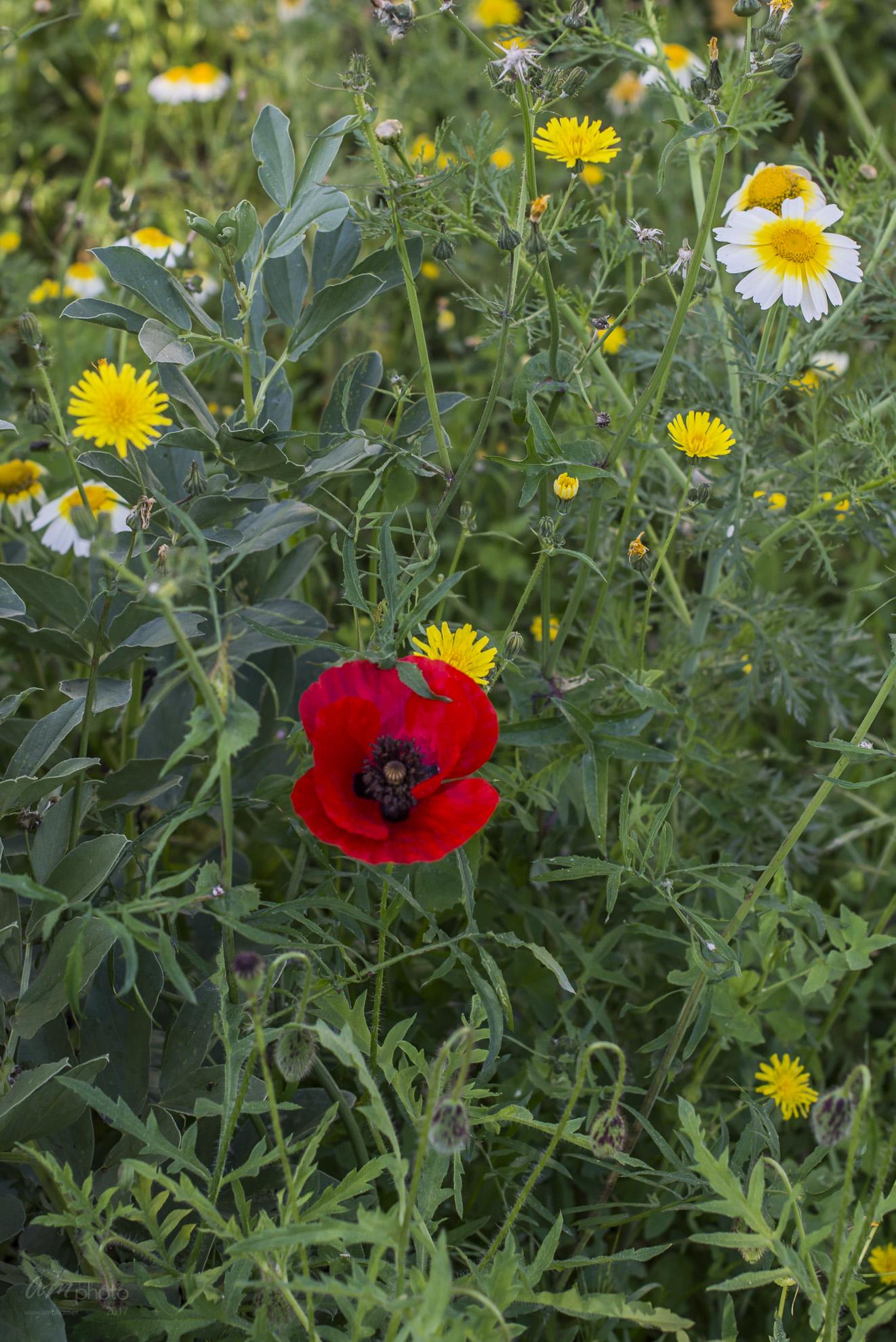 Wild Flowers-402