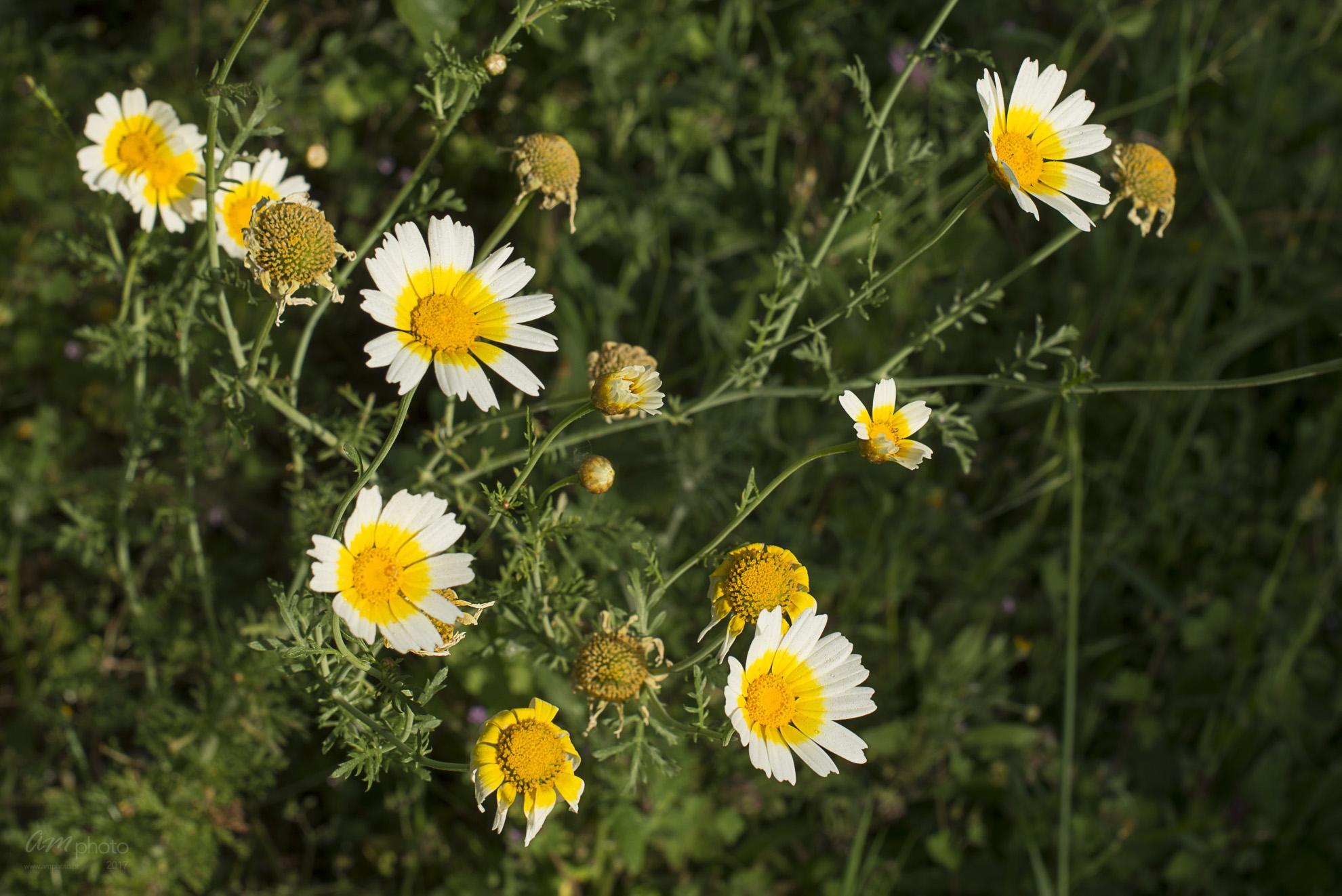 Wild Flowers-243