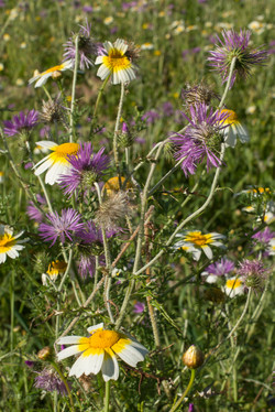 Wild Flowers-274