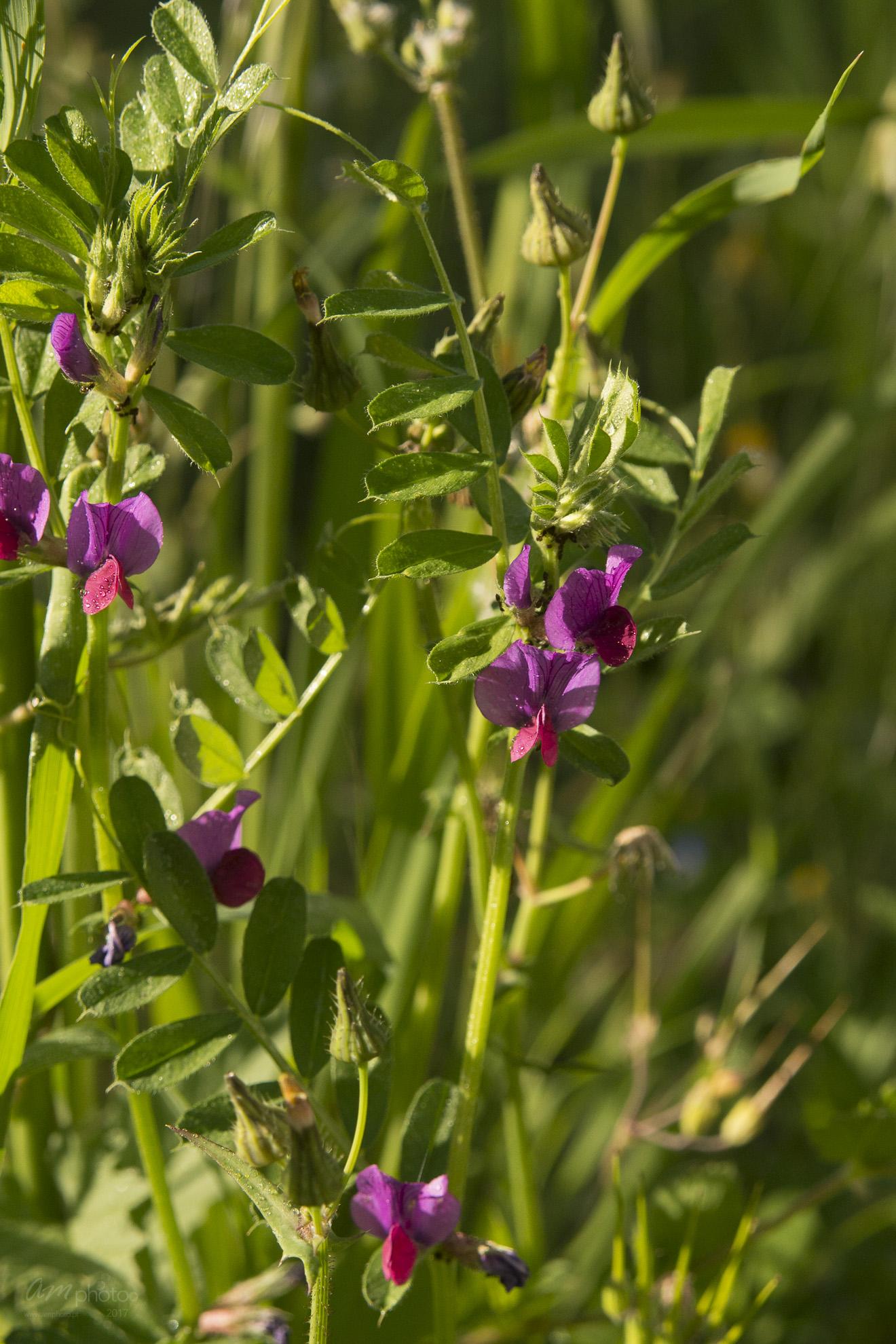 Wild Flowers-325