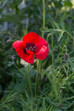 Wild Flowers-398