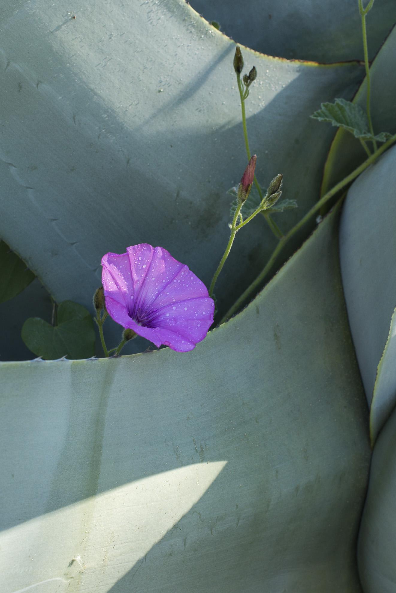 Wild Flowers-281