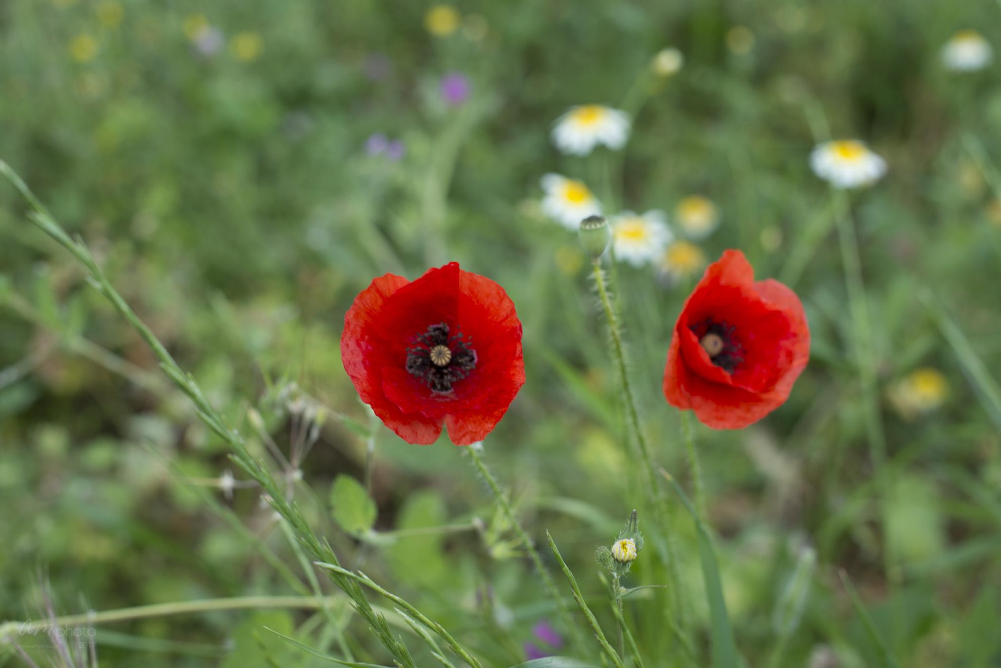 Wild Flowers-171