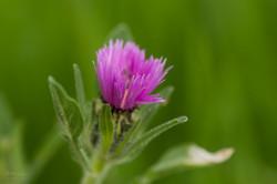 Wild Flowers-545