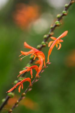 Wild Flowers-547